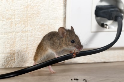 Pest Control in Greenhithe, DA9. Call Now! 020 8166 9746