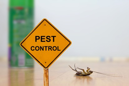 Pest Contol in Greenhithe, DA9. Call Now 020 8166 9746