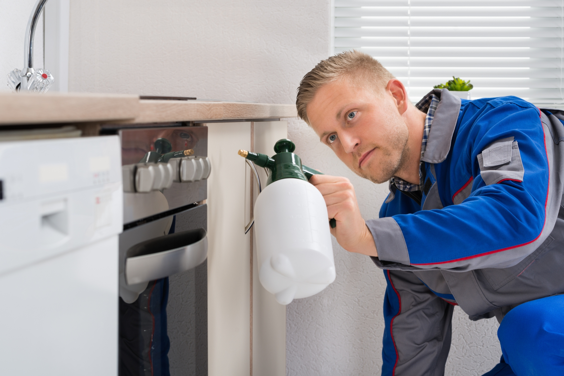 Pest Inspection, Pest Control in Greenhithe, DA9. Call Now 020 8166 9746