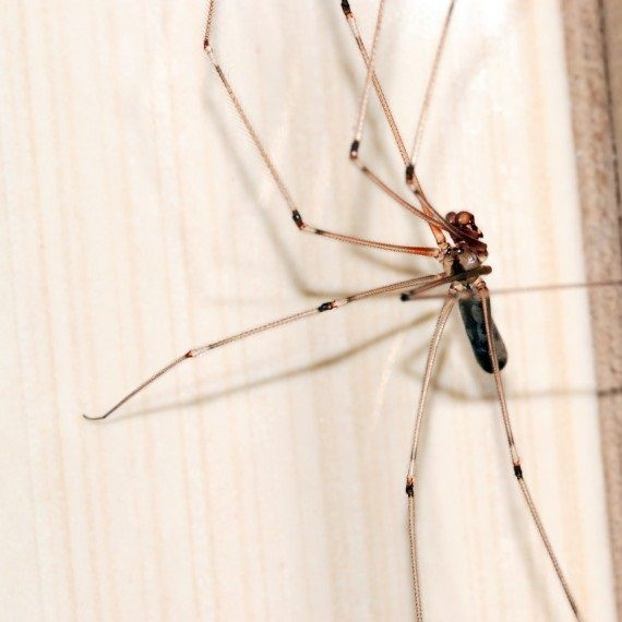 Spiders, Pest Control in Greenhithe, DA9. Call Now! 020 8166 9746